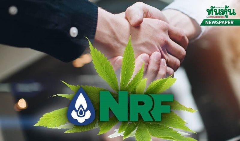 NRFดีลพันธมิตรลุยกัญชง สินค้าจ่อเข้าโมเดิร์นเทรด