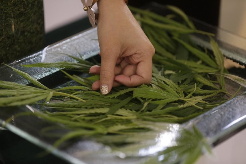 Hemp goes from zero to economic hero A slew of Thai companies have identified opportunities and are planning to ride the wave